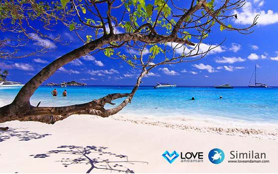 similan-islands-snorkeling4